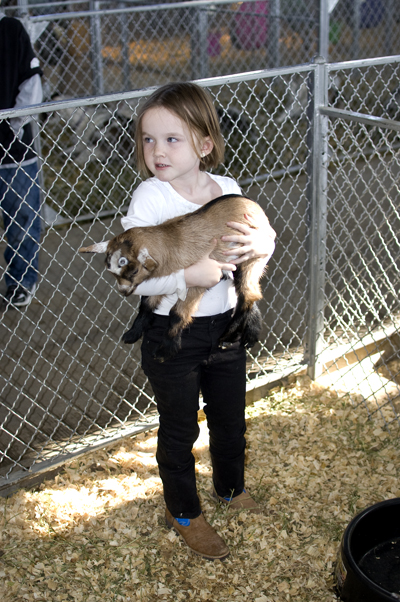 little girl holding a baby goat