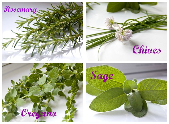 herb2 Rosemary, Chives, Oregano & Sage