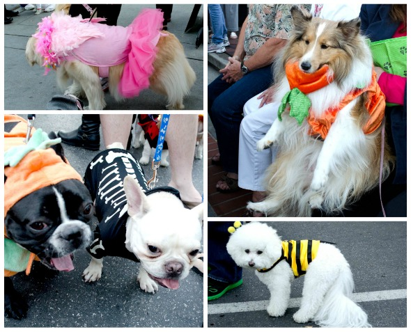puppies in costume