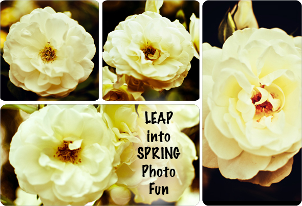 leapmain Leap Into Spring Photo Fun