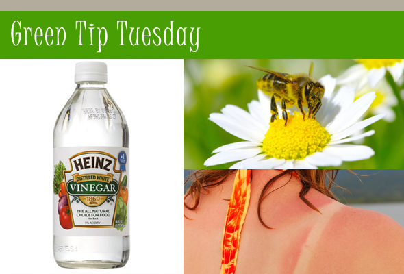 gttbeesmain Green Tip Tuesday   Vinegar Uses when Nature Attacks