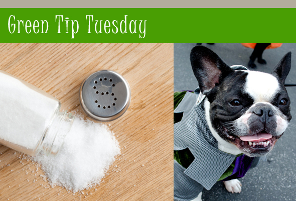 gttfleasmain Green Tip Tuesday   Attacking Fleas with Salt