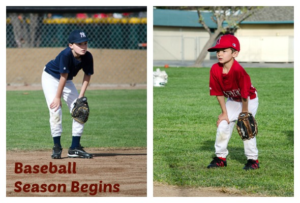 bballmain Baseball Season Begins